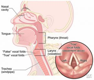 GERD and LPR | Ear, Nose and Throat Specialists of Illinois
